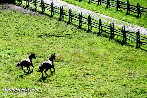 Deux chevaux à Bromont : 1er prix mondial